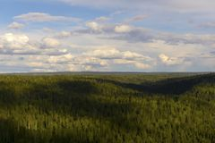从鸟` s眼睛视图的北方针叶林 免版税库存图片