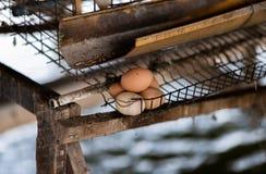 从鸡的未加工的鸡蛋,等待销售 免版税库存图片