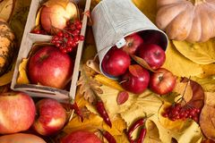 从黄色叶子,苹果,南瓜的秋天背景 秋季、eco食物和收获概念 免版税库存照片