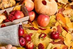 从黄色叶子,苹果,南瓜的秋天背景 秋季、eco食物和收获概念 库存图片