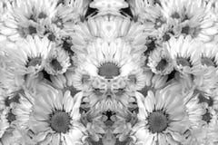 从黄色菊花花的被整顿的照片 免版税图库摄影