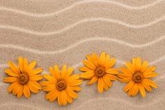 从黄色雏菊的之字形与文本的空间 在视图之上 库存图片