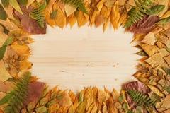 从黄色,红色和绿色干燥秋叶的框架在木背景 库存图片