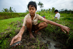 从巴厘岛的可怜的子项 库存照片
