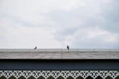 从botton到屋顶,在屋顶的两只鸟的看法 免版税库存照片