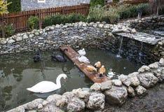 从Caraiman修道院的鸟 库存照片