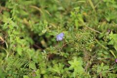 从fllowers的自然与紫色蝴蝶 图库摄影