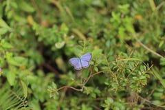 从fllowers的自然与紫色蝴蝶 库存图片