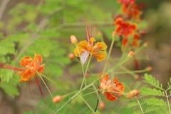 从fllowers的自然与紫色蝴蝶 免版税库存照片