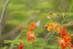 从fllowers的自然与紫色蝴蝶 免版税库存图片