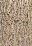 从forestcan的木样式使用作为背景 向量例证