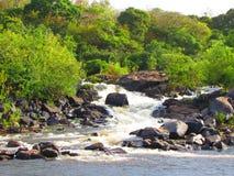 从Guayana的自然 库存图片