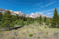 从Icefield大路的风景看法在落矶山脉在班夫国家公园,亚伯大加拿大 免版税库存图片