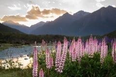 从Milford Sound,新西兰的春天场面 库存图片