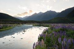 从Milford Sound,新西兰的春天场面 免版税库存图片