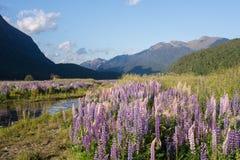 从Milford Sound,新西兰的春天场面 图库摄影