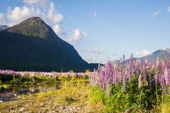 从Milford Sound,新西兰的春天场面 免版税库存照片