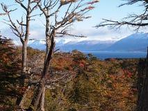 从Navarino海岛看的小猎犬海峡,麦哲伦地区,智利 免版税库存照片