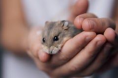 仓鼠偎依 库存图片