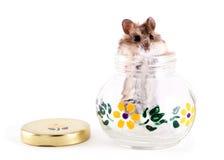 仓鼠瓶子 免版税库存图片