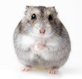 看在它的在仓鼠的白色外面的滑稽的兔子猎豹m4可以打死笼子图片