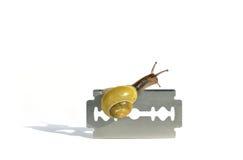 仔细蜗牛 免版税库存照片