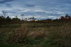 他使草和灌木的照片环境美化与深蓝多云天空在秋天 免版税库存照片