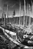 他意外收获在一个狂放的森林里 免版税库存照片