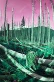 他意外收获在一个狂放的森林里 库存图片