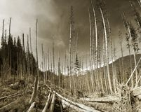 他意外收获在一个狂放的森林里 免版税库存图片