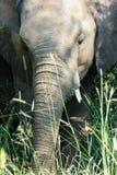 他的皮肤接近的显示的细节的大象画象  免版税库存图片