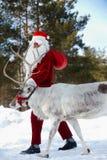 他的驯鹿圣诞老人 图库摄影
