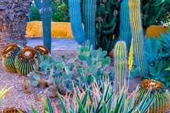 仙人掌不同看法在Playa de las美洲,特内里费岛,加那利群岛,西班牙海岸的  免版税库存图片