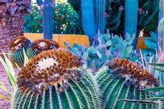 仙人掌不同看法在Playa de las美洲,特内里费岛,加那利群岛,西班牙海岸的  库存图片
