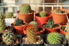仙人掌和多汁植物在罐 免版税库存图片