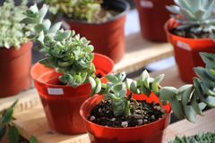 仙人掌和多汁植物 库存照片