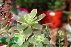 仙人掌和多汁植物 免版税图库摄影