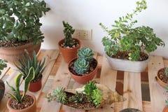 仙人掌和多汁植物 免版税库存图片