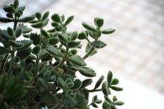 仙人掌和多汁植物 库存图片