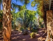 仙人掌和棕榈树在雅尔丹Majorelle植物园在马拉喀什 免版税库存图片