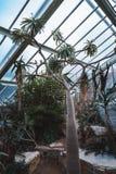 仙人掌和植物从十不同气候带在威尔士王妃音乐学院里基奥庭院的 库存图片