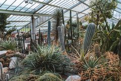 仙人掌和植物从十不同气候带 免版税图库摄影