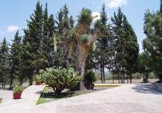 仙人掌和植物在公园 免版税图库摄影
