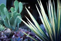 仙人掌和沙漠植物在营业所附近 免版税图库摄影