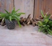 仙人掌和漂流木头 免版税库存照片