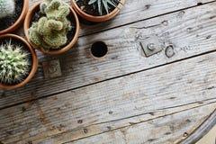 仙人掌品种在使用的工业木桌上的 免版税库存图片
