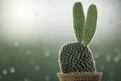 仙人掌在与水下落的一个雨天在窗口背景 免版税库存照片