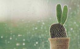 仙人掌在与水下落的一个雨天在窗口背景 免版税库存图片