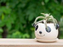 仙人掌在熊猫罐 投入树一个木桌绿色背景  免版税库存图片