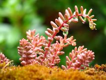仙人掌多汁植物 库存图片